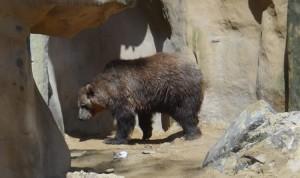 Des portes d'accès pour les ours sont commandées à distance